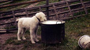 milk-1174048_1920