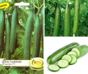 сортови семена на краставица от агроаптека Иван Чавдаров